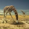 Giraf spil